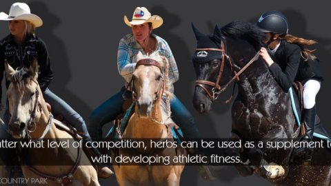 Herbs for Competition Fitness