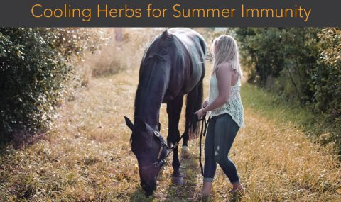 Cooling Herbs for Summer Immunity