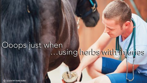 Using herbs with injuries