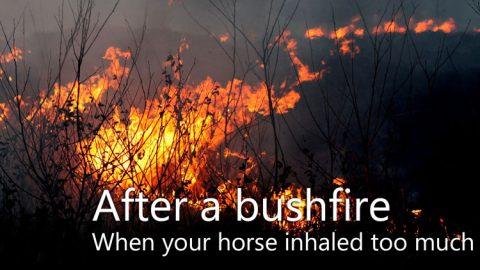 After a bushfire