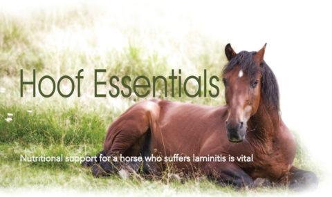 Hoof Essentials