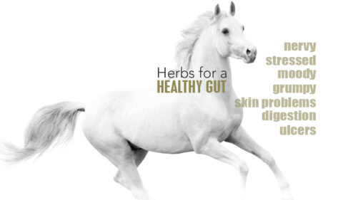 Herbs for a  healthy gut
