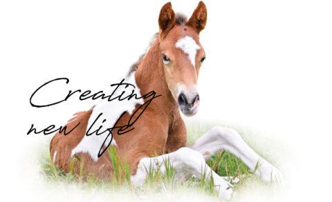 Creating new life …