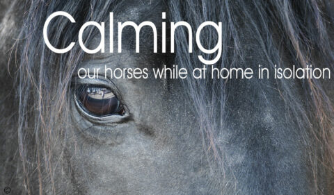 Calming  our horses while at home in isolation